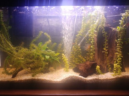25 gallons planted tank (mostly live plants and fish) - My peaceful small community planted fish tank
