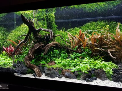 15 gallons planted tank (mostly live plants and fish) - My 15 gallon high energy planted tank.