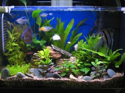 17 gallons planted tank (mostly live plants and fish) - Improved with DIY CO2.
