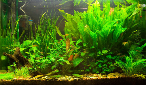 Choosing The Right Lighting According To Tank Size : aquarium lighting for live plants - azcodes.com