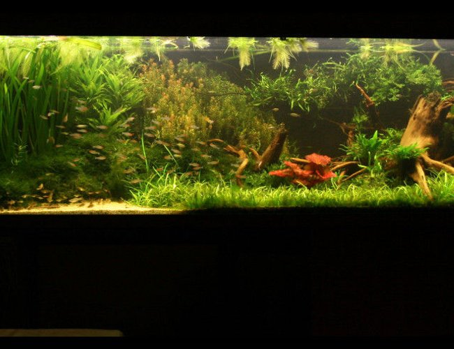 422 gallons planted tank (mostly live plants and fish) - My tank now, re-scaped (a bit) for Discus fish