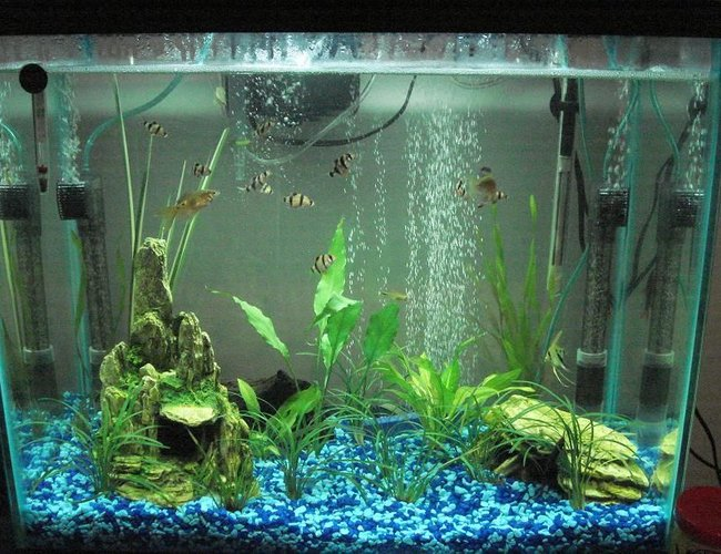 25 gallons planted tank (mostly live plants and fish) - PLEASE TELL ME WHAT YOU THINK!! PLEASE:)