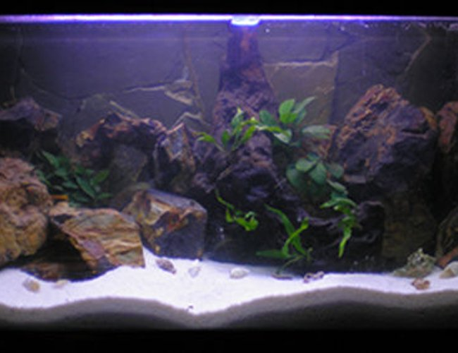 188 gallons planted tank (mostly live plants and fish) - Dimension 100x50x40