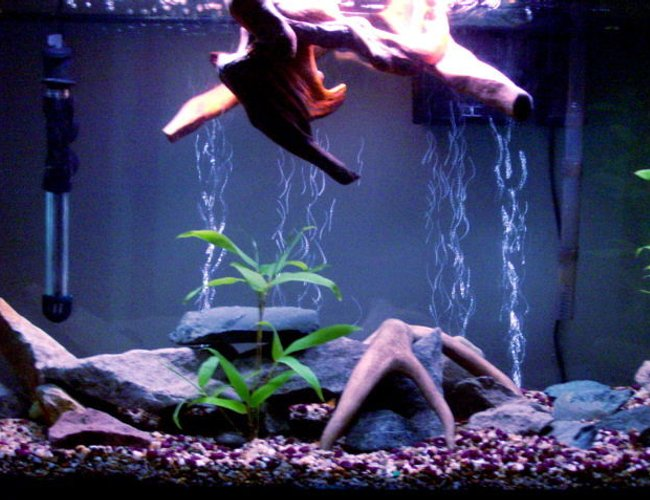 45 gallons planted tank (mostly live plants and fish) - 45 Gallon Tank - Flat River Rock/ Slabs - Bamboo Plants, Floating Wood Top Piece - Asiatic Knifefish, Needle Nose Gar, Angelfish, Kribensis Cichlids