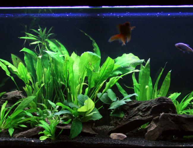 90 gallons planted tank (mostly live plants and fish)