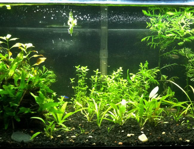 20 gallons planted tank (mostly live plants and fish) - 20 Gallon Planted tank. Low Tech tank. Scape # 2