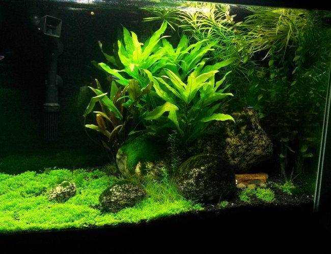 20 gallons planted tank (mostly live plants and fish) - Plants