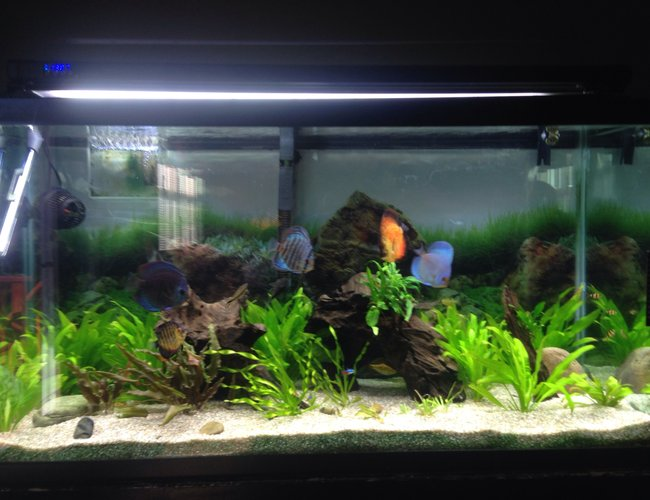 93 gallons planted tank (mostly live plants and fish) - Freshwater tank with live plants