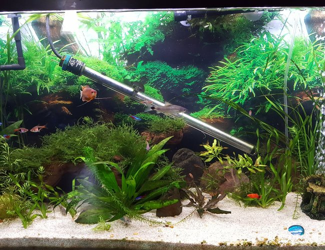 55 gallons planted tank (mostly live plants and fish) - 55 gallon community