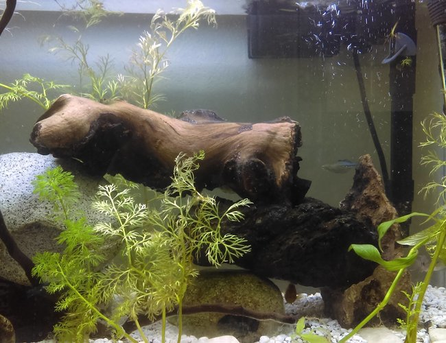 20 gallons planted tank (mostly live plants and fish) - don't mind the bit of mysis shrimp on the plant theyle get to it soon..