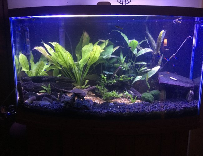 47 gallons planted tank (mostly live plants and fish) - Forgotten Drive. My first tank.