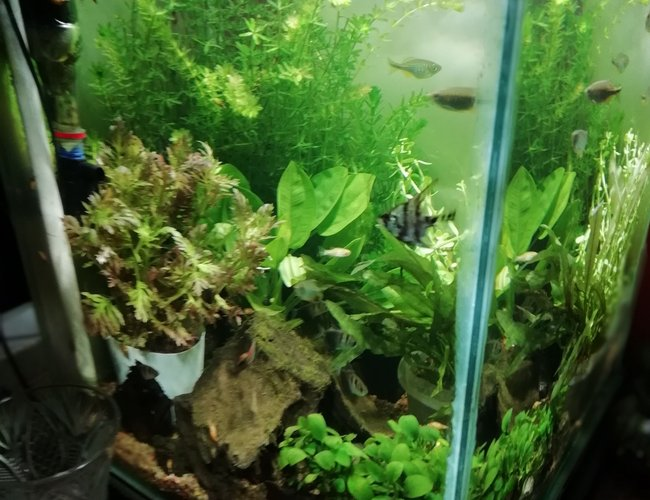 30 gallons planted tank (mostly live plants and fish) - Planted cube