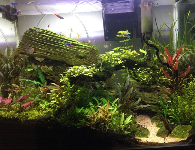 20 gallons planted tank (mostly live plants and fish) - Escarpment in the Jungle