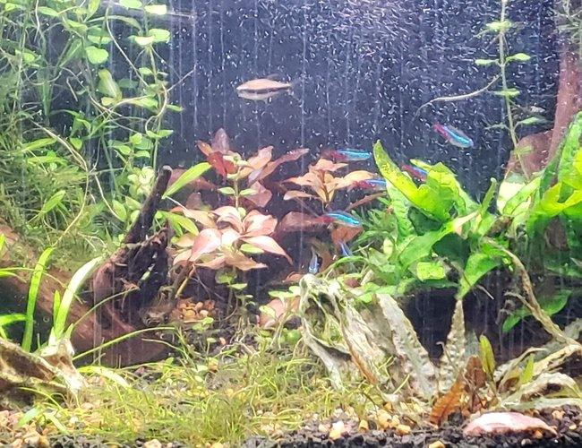 29 gallons planted tank (mostly live plants and fish) - 29 gallon