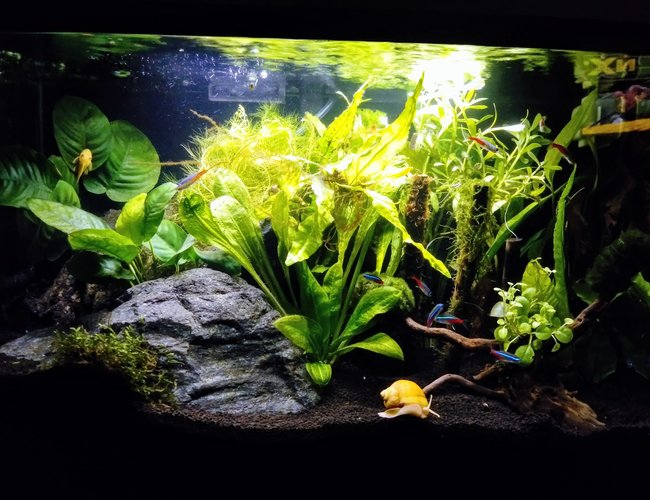 10 gallons planted tank (mostly live plants and fish) - Bruce banner!