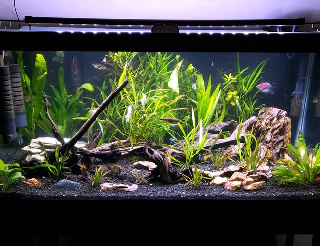40 gallons planted tank (mostly live plants and fish) - 40g planted stocked with too much to list!