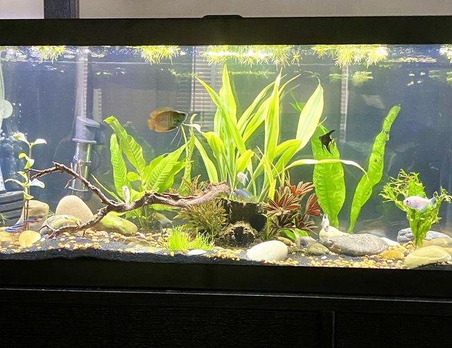 20 Gallons Fish Tanks And Aquariums
