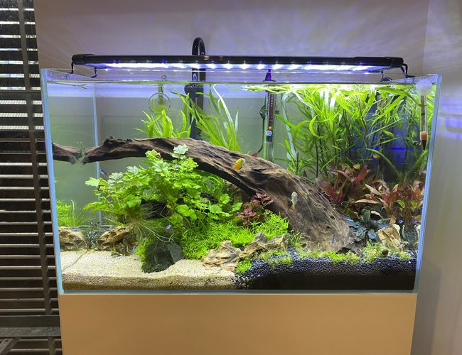 23 gallons planted tank (mostly live plants and fish) - Updated the tank. Removed the gravel and added some Colorado sand. Looks more natural I think. Moved some plants around.