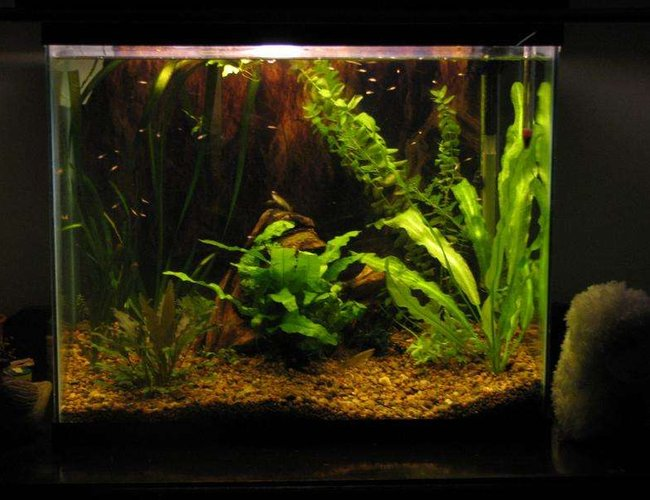 50 gallons planted tank (mostly live plants and fish) - 15g