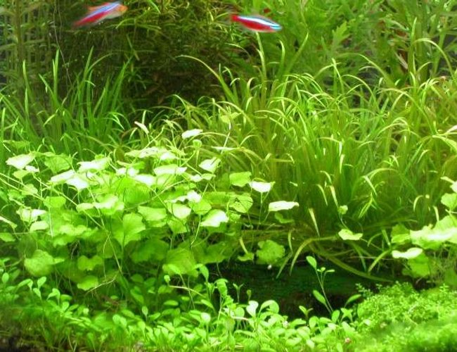 50 gallons planted tank (mostly live plants and fish) - ...