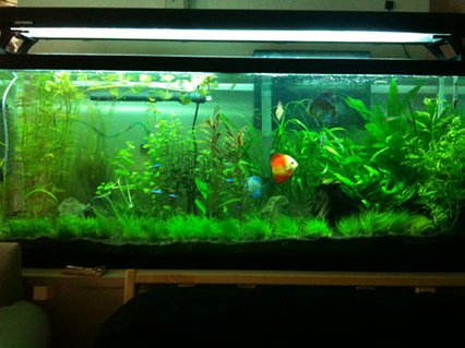 Rated #32: 55 Gallons Planted Tank - 3 months of work