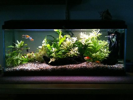 Rated #39: 22 Gallons Planted Tank - My tank.