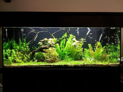 Rated #8: 90 Gallons Planted Tank
