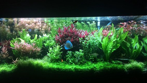 Rated #2: 75 Gallons Planted Tank - Planted 75