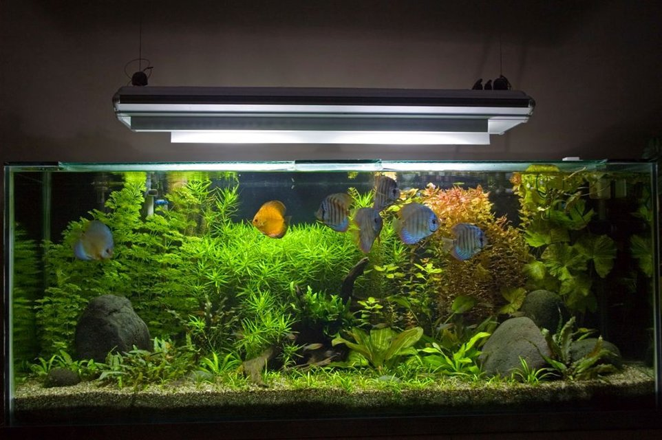 Rated #1: 100 Gallons Planted Tank - My 450 Litre Planted Discus Tank