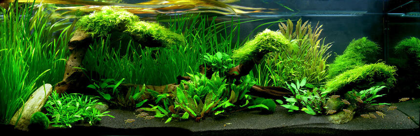 Rated #2: 40 Gallons Planted Tank - a Fishtank looks like Australia....