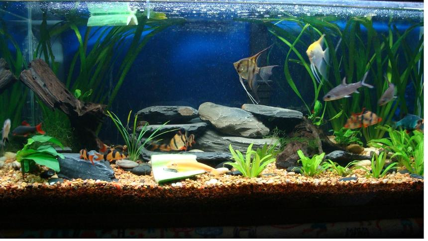 Rated #98: 40 Gallons Planted Tank - 40 gallon planted tank