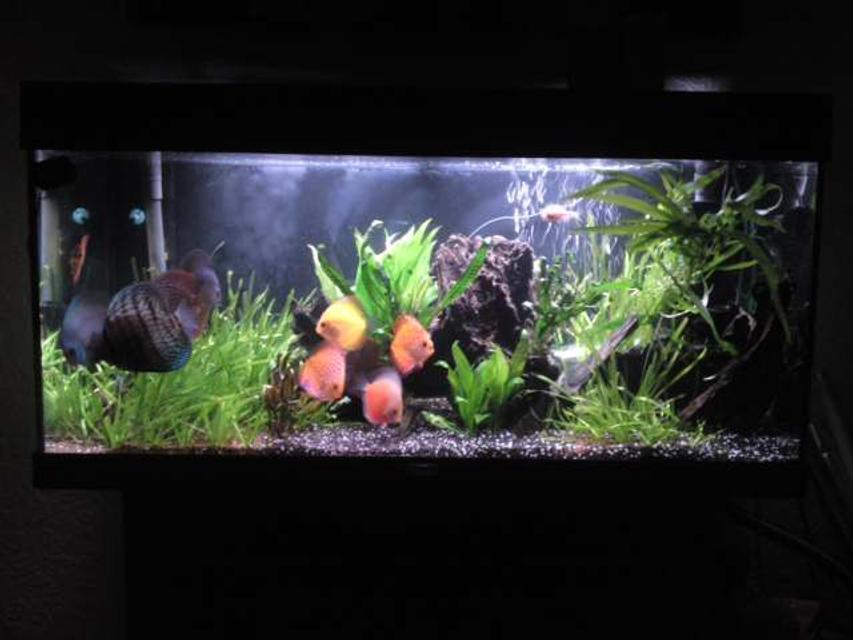 Rated #91: 48 Gallons Planted Tank - main