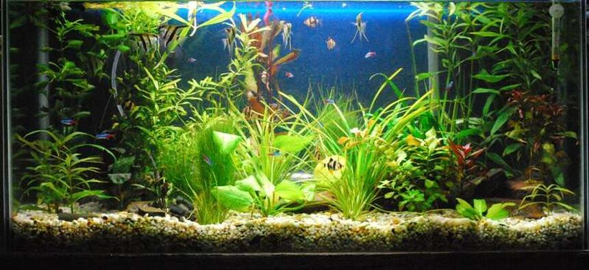 Rated #23: 60 Gallons Planted Tank - Photo 1