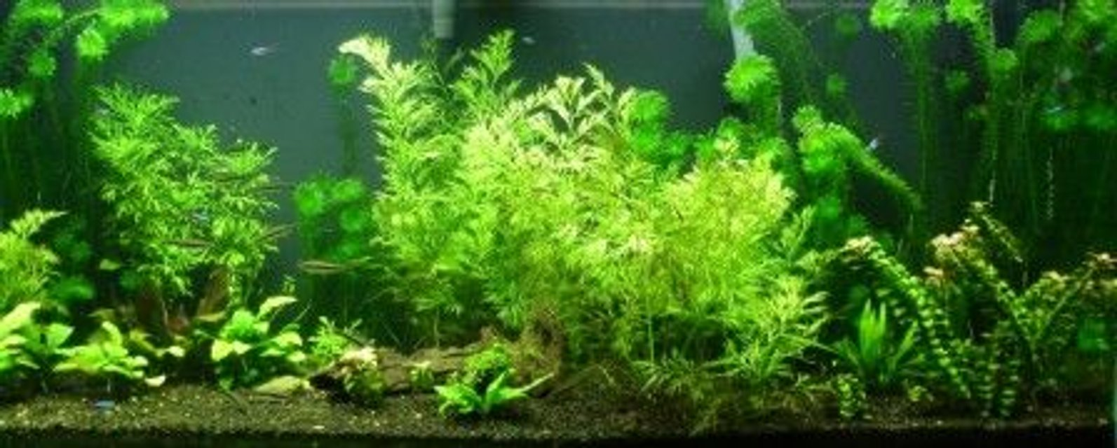 Rated #75: 75 Gallons Planted Tank - 1 year old tank.