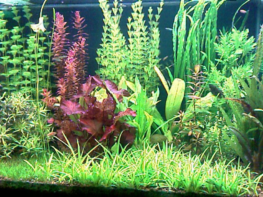 Rated #56: 52 Gallons Planted Tank - This is my planted tank 200 liter