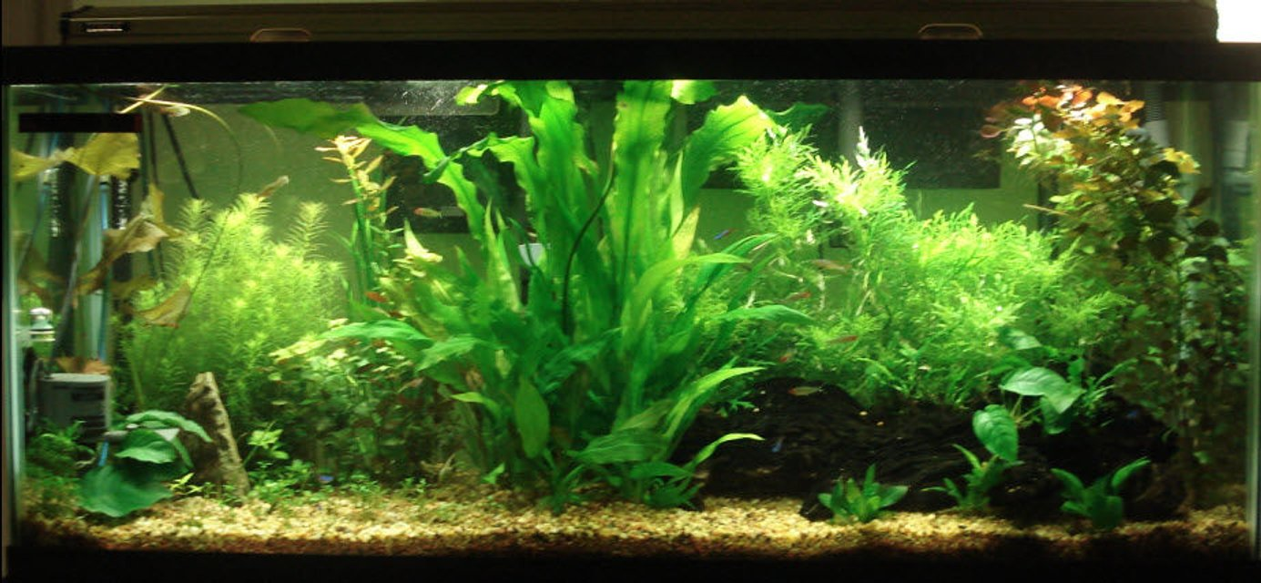 Rated #57: 55 Gallons Planted Tank - My 55 Gallon Tank