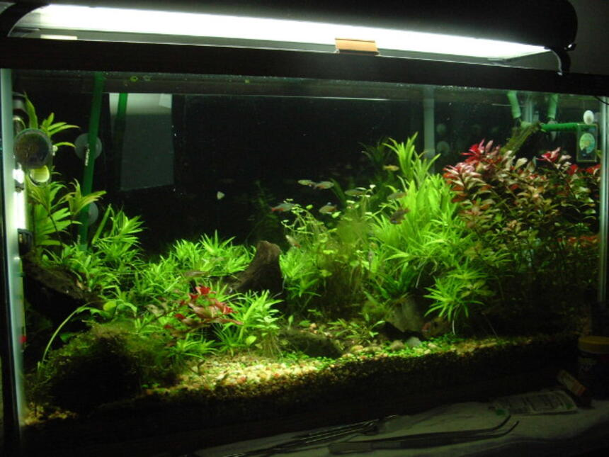Rated #28: 38 Gallons Planted Tank - 38 gal planted tank about a year old