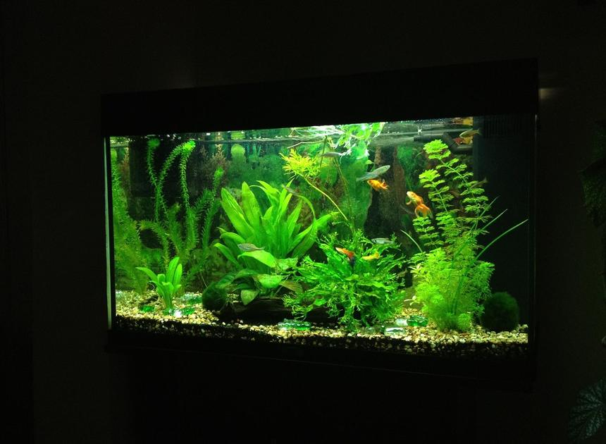 Rated #7: 40 Gallons Planted Tank - Update as of 26.02.12