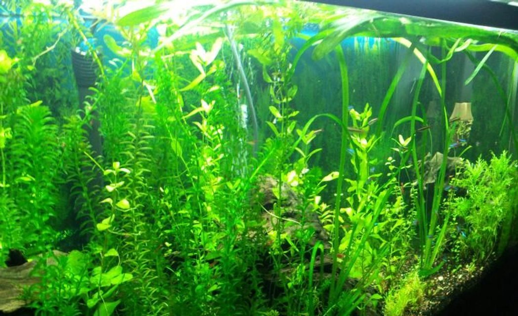 Rated #58: 55 Gallons Planted Tank - 55g angled shot