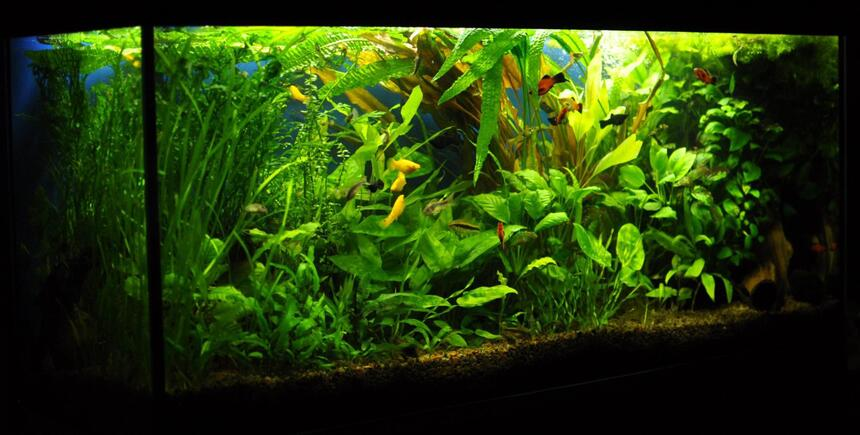 Rated #8: 53 Gallons Planted Tank - 53 gallons