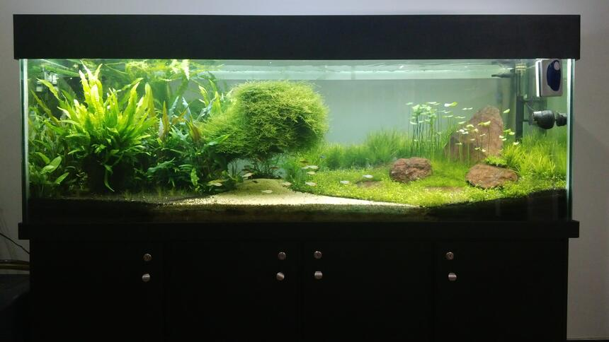 Rated #3: 180 Gallons Planted Tank - My tank afer 8 months.