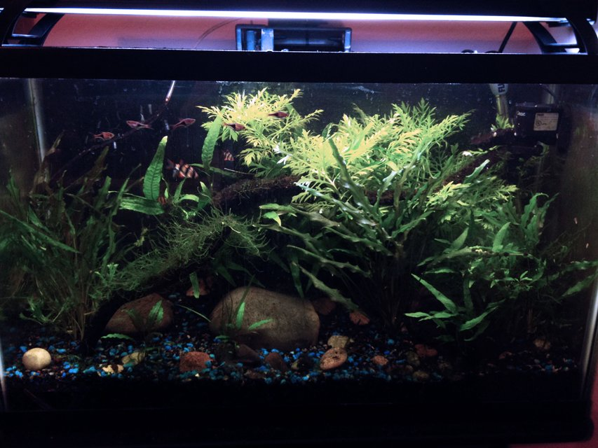 Rated #41: 29 Gallons Planted Tank - My first planted tank.