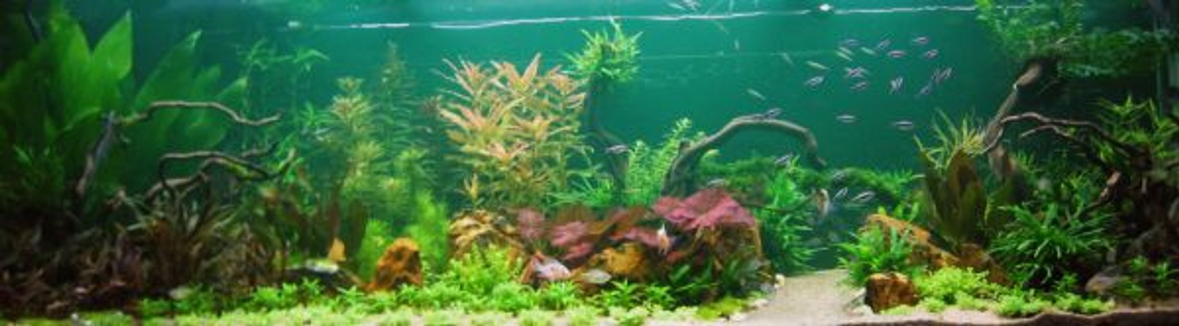 Rated #2: 190 Gallons Planted Tank - My tank.