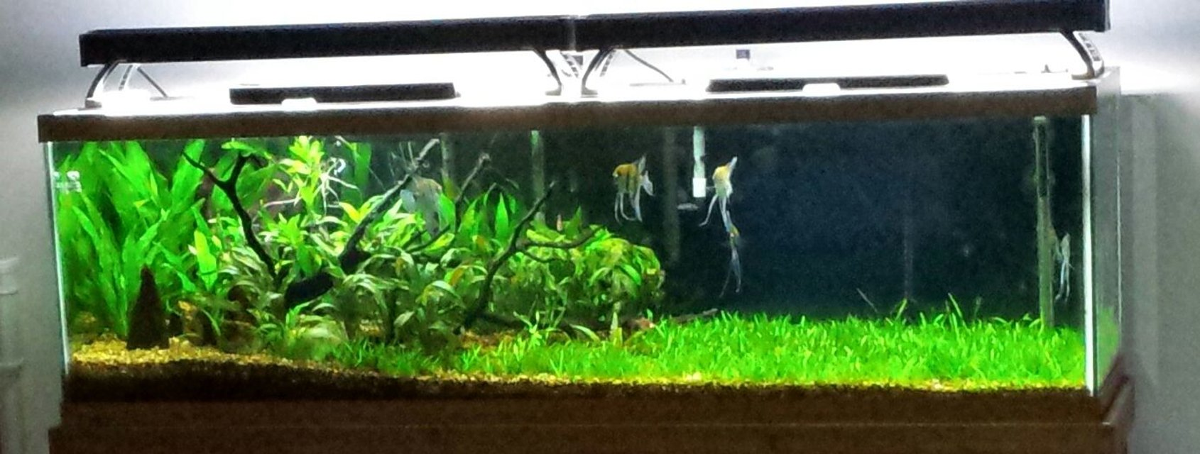 Rated #6: 125 Gallons Planted Tank - Rivers Edge.