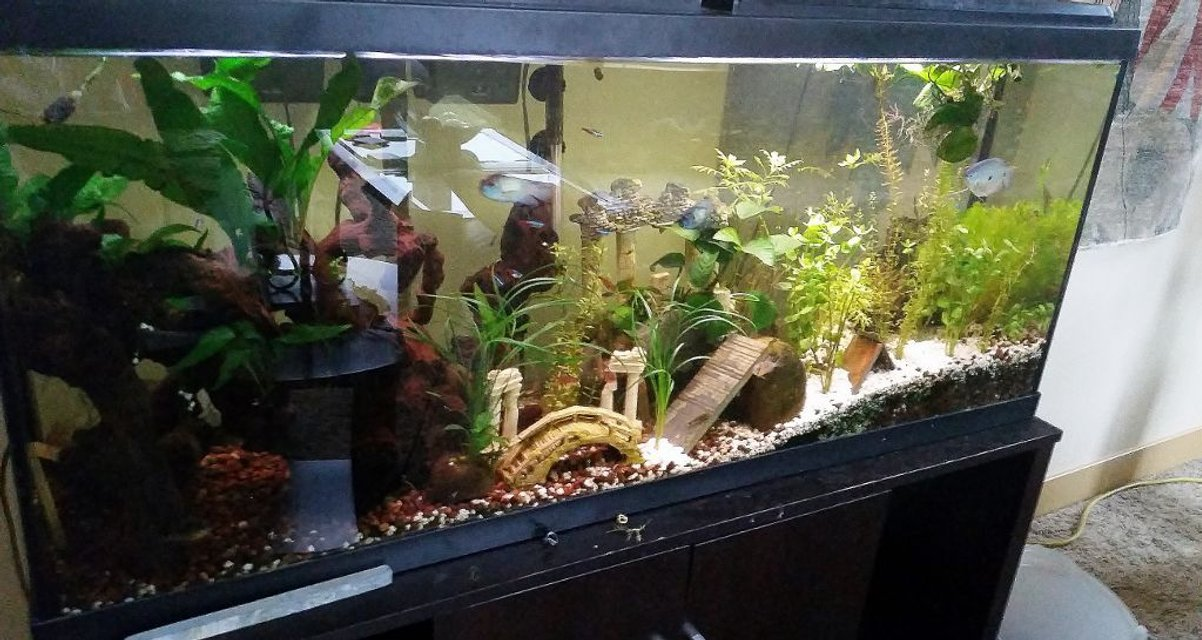 Rated #65: 55 Gallons Planted Tank - my 55 gallon planted tank