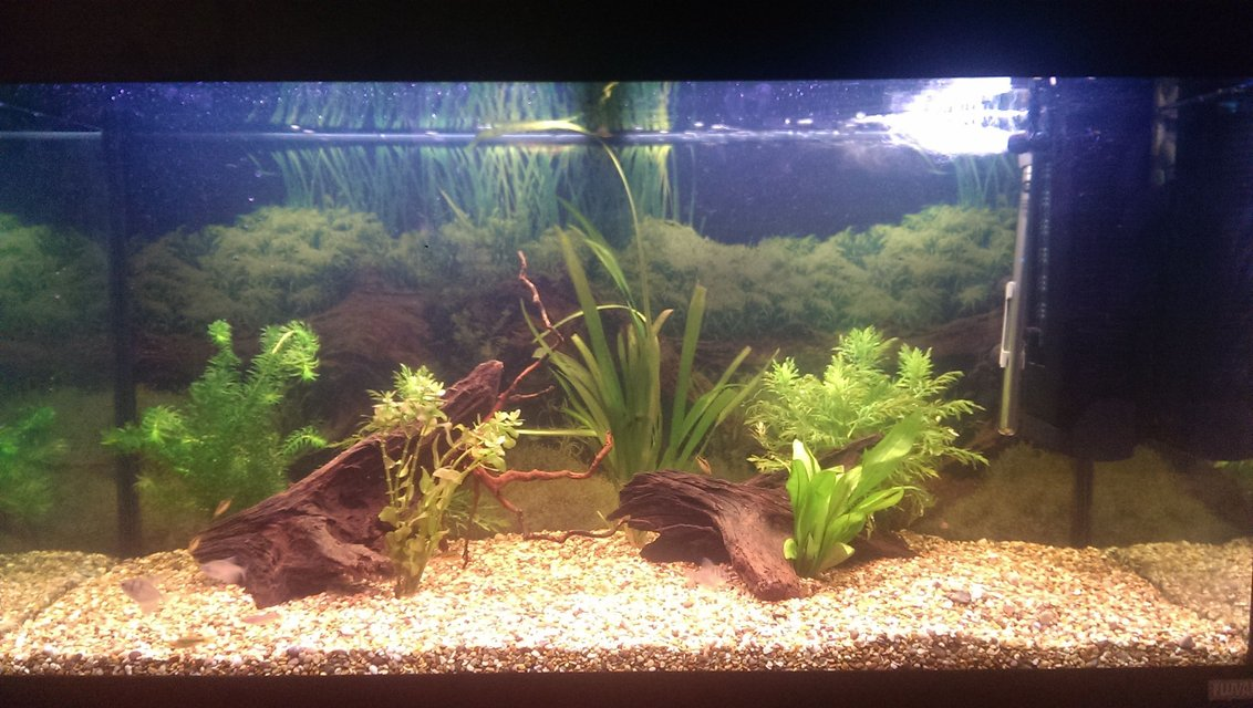 Rated #64: 40 Gallons Planted Tank - Slowly getting there