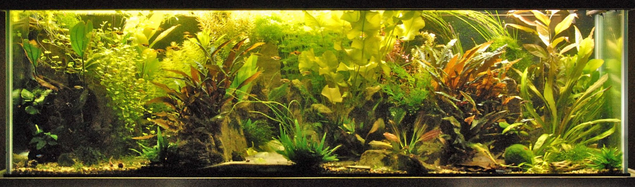 Rated #1: 120 Gallons Planted Tank - The main tank