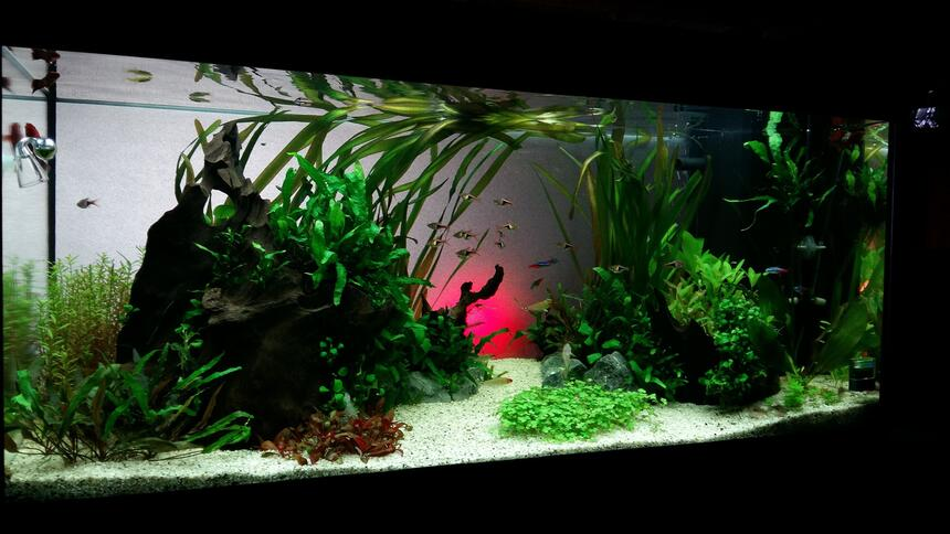 Rated #10: 50 Gallons Planted Tank - MY zen