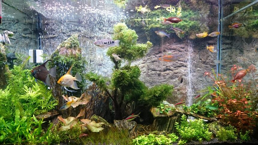Rated #4: 72 Gallons Planted Tank - Planted with Iwagumi woodstone and DIY sand waterfall