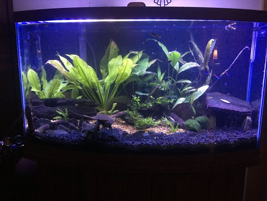 Rated #41: 47 Gallons Planted Tank - Forgotten Drive. My first tank.